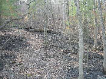 Burned Forest Floor along Crisman Hollow Road