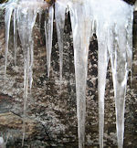 Ice on Kerns Mt Trail
