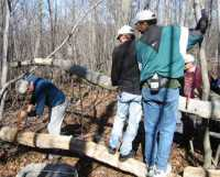 Photo: Sawing a log on Kearns Mountain